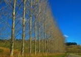 A Drive In The Country - Trees Waiting For Leaves by LynEve, photography->landscape gallery