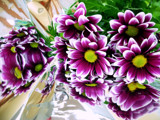 """in the """"mirror"""".. by 89037, Photography->Flowers gallery"""