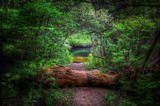 Tunnel To Tranquility by stylo, photography->nature gallery