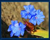 Bloom'n Foofies by tigger3, photography->flowers gallery