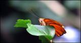 Paint the Sky XXIII by Hottrockin, Photography->Butterflies gallery