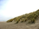 Pacific Dunes by haynen, photography->landscape gallery