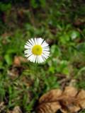 Small Awakening by jttigereye, Photography->Flowers gallery