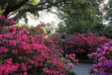 Azalea Crossing by allisontaylor, photography->gardens gallery
