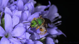 Little Bee #2 by ryzst, photography->insects/spiders gallery
