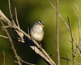 I Love Fall Light!!!! by garrettparkinson, photography->birds gallery