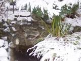Winter Garden Pond by MythD, Photography->Landscape gallery