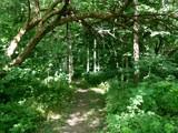 The Beaten Path by jojomercury, photography->landscape gallery