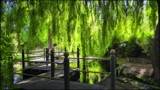 Dappled Willows by LynEve, photography->gardens gallery