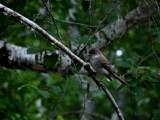Taking a Break by Rayn_dragon, Photography->Birds gallery