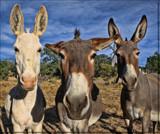 See No Evil, Hear No Evil, Speak No Evil by quickshot, photography->animals gallery
