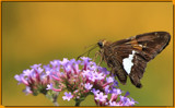 Calendar Flutterby by tigger3, photography->butterflies gallery