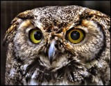The Stare by Dunstickin, photography->birds gallery