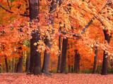 Winter Wish List by jojomercury, Photography->Landscape gallery