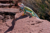 A Friendly Arizona Lizard by jeenie11, photography->reptiles/amphibians gallery