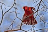 Morning Yoga by nanadoo, photography->birds gallery