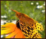 Matching Colors by amishy, Photography->Butterflies gallery