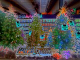 Christmas Trees At Walmart by galaxygirl1, photography->manipulation gallery