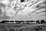 Rural Scene In B&W by corngrowth, contests->b/w challenge gallery