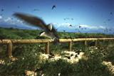 Australia Birds by PamParson, Photography->Birds gallery