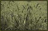 Winter Grass by ironjoe, Photography->Manipulation gallery