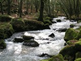 Woodland stream by Si, Photography->Landscape gallery