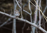 Return of the Sparrows by Pistos, photography->birds gallery