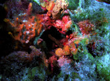 Coral Bouquet NASA Style by paramedyc, Photography->Underwater gallery