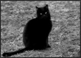 A Friendly Feline by tigger3, contests->b/w challenge gallery