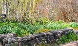 Garden Lenten Rose, and Shadow Play by tigger3, photography->gardens gallery