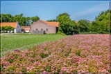 Working The (Flower) Fields by corngrowth, photography->landscape gallery