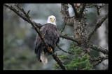 Perplexed by garrettparkinson, photography->birds gallery