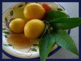 Three Lemons by LynEve, photography->still life gallery