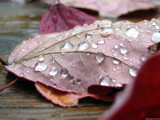 Crying Leaf by Hottrockin, Photography->Macro gallery