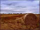 Harvest Afternoon by LynEve, Photography->Landscape gallery