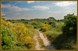 Flowering-time In The Sand Dunes 4  by corngrowth, Photography->Landscape gallery