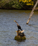 Watching Cormorants by Pistos, photography->birds gallery
