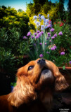 Heavenly scent by cajoler, photography->pets gallery