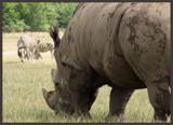 Safari by anacris, photography->animals gallery