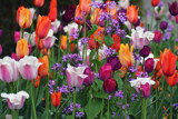Tulips In Spring by Ramad, photography->flowers gallery