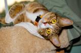 Tango by avedeloff, photography->pets gallery