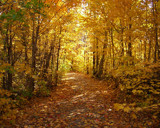Along the Autumn Trail by soco3, Photography->Landscape gallery