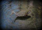 Back to nature by GomekFlorida, photography->birds gallery