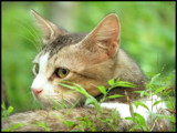 Smelling Mice? by Sree, Photography->Pets gallery