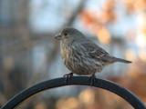 Yet another Sweet Tweet by Hottrockin, Photography->Birds gallery