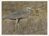 Pest Control by garrettparkinson, Photography->Birds gallery