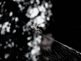 Working by Alexxandra, photography->insects/spiders gallery