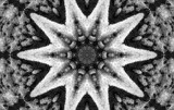 Snow Star by tigger3, photography->manipulation gallery