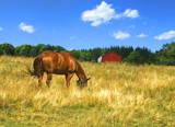 Home is Where the Grass Is by cynlee, photography->animals gallery