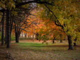 Forest Park in Orange by jojomercury, Photography->Landscape gallery